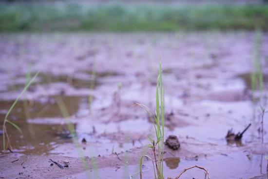田植えから学んだこと。自分の外・自分の中の雑草取りをこまめにやっていきましょう。